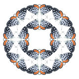 Geometrisk fjärilsformisolat på vit bakgrund Royaltyfria Foton