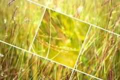 Geometrisk gräsabstrakt begreppbakgrund med trianglar och linjer Arkivbilder
