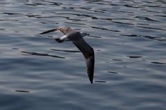 Geometrisk Seagull royaltyfria foton