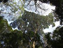 Geometriskt träd Fotografering för Bildbyråer