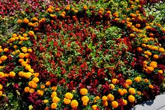 The geometry of the city flower beds. Lytkarino royalty free stock photos