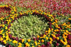 The geometry of the city flower beds Stock Photos