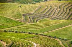 Geometry in vineyars stock photo
