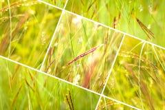 Geometrycznej trawy abstrakcjonistyczny tło z trójbokami i liniami obrazy royalty free