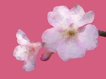 Geometryczny Sakura kwiat Zdjęcia Royalty Free