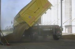 Geoogst enkel graan binnen een aanhangwagen Korrel van aanhangwagen in een silo voor verwerking wordt gegoten die royalty-vrije stock fotografie