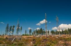 Geoogst hout Royalty-vrije Stock Foto's