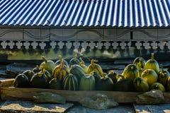 Geoogste pompoenen op het dak royalty-vrije stock afbeeldingen