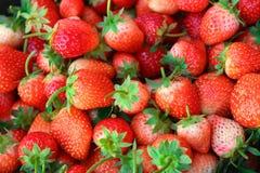 Geoogste verse aardbei rode vruchten Stock Foto