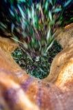 Geoogste verse olijven op een gebied in Kreta, Griekenland Royalty-vrije Stock Foto's