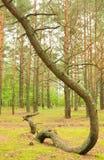Ζώνη Geopathogenic Στοκ φωτογραφίες με δικαίωμα ελεύθερης χρήσης
