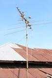 Geopeliastriata op antenne Royalty-vrije Stock Afbeelding