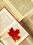Geopende boeken en esdoornbladeren Stock Fotografie