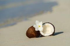 Geopende kokosnoot op het zandige strand van tropisch eiland Stock Fotografie