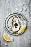 Geopende oester met zwarte steurkaviaar en citroen op ijs in metaalplaat op grijze concrete achtergrond De hoogste vlakke mening, Stock Afbeeldingen
