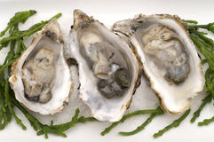 Geopende oesters Stock Afbeelding
