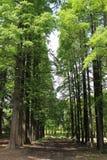 Geordnete Bäume Lizenzfreie Stockfotos