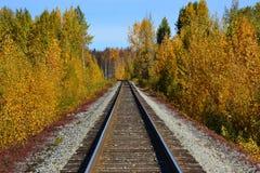 George Parks Highway dell'Alaska Immagini Stock Libere da Diritti