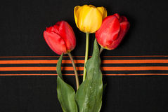 George ribbon, red and yellow tulips Royalty Free Stock Photo