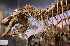 George S. Eccles Dinosaur Park in Ogden, Utah. USA Stock Photography
