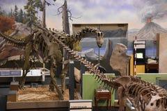 George S. Eccles Dinosaur Park in Ogden, Utah. USA Royalty Free Stock Photos
