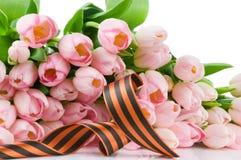 George tasiemkowi i różowi tulipany Fotografia Royalty Free
