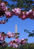 george Washington monument Obraz Stock