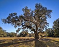 The George Washington Oak At Beautiful Hampton Plantation stock photos