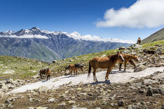 Georgië, de Kaukasus Stock Foto's
