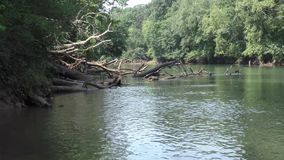Georgia, Abbotts Bridge Park, Zoom out from dead trees along the shore of the Chattahoochee River. Zoom out from dead trees along the shore of the Chattahoochee stock footage