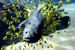 Georgia aquarium. At Atlanta stock photos