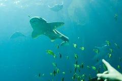 Georgia-Aquarium stockbilder