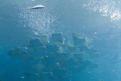 Georgia aquarium. At Atlanta royalty free stock image