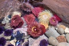 Georgia aquarium. At Atlanta stock photo