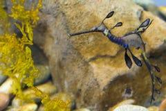 Georgia aquarium. At Atlanta stock photography