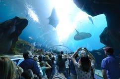 Free Georgia Aquarium Tunnel Royalty Free Stock Photos - 18487198