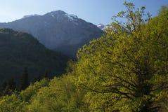 Georgia berg i sommartid Royaltyfri Bild