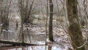 Georgia, Chattahoochee River, pentola di A attraverso la palude, alberi, acqua, ceppi morti, erba archivi video