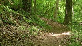 Georgia, grande insenatura, cercante un percorso del piede su una collina che va verso grande insenatura video d archivio