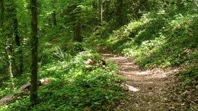 Georgia, grande insenatura, guardante giù un percorso del piede su una collina che va verso grande insenatura stock footage