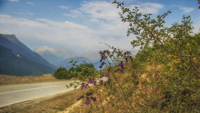 Georgia,Gruzia,the road to Mestia. Georgia,Gruzia,Svaneti region ,the mountains and flowers on the way to Mestia stock photo