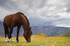 georgia Hästen på berget betar Royaltyfri Foto