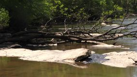 Georgia, Jones Bridge Park, Dead trees and rocks at the Chattahoochee River river banks. A view of dead trees and rocks at the Chattahoochee River river banks stock video footage