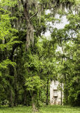 Georgia Oaks and Spanish Moss Royalty Free Stock Image
