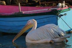 Georgia Pelican famosa dos mykonos, cyclades, Grécia foto de stock royalty free