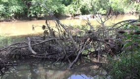 Georgia, Riverside Park, A zoom out on a large amount of dead trees on the shore of Big Creek. A zoom out on a large amount of dead trees on the shore of Big stock video