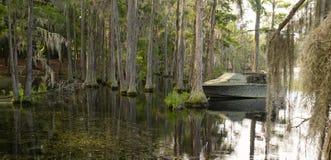 Georgia State Swamp Lake ha sud profondo abbondante degli alberi di Cypress fotografie stock
