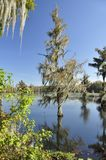 Georgia swampland Stock Photography
