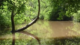 Georgia, Vickery Creek, Looking downstream on Vickery Creek and a bent tree in  the water. This is looking downstream on Vickery Creek and a bent tree in  the stock video footage