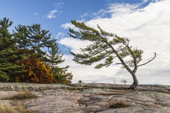 Georgian Bay Beauty. Wind Swept Tree on Georgian Bay, a Group Of Seven inspiration Stock Photo